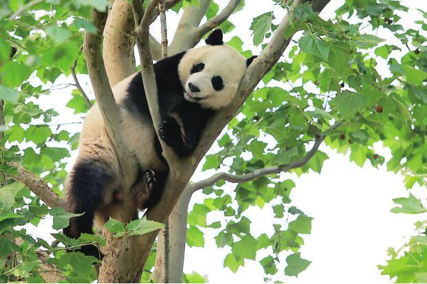 五一假日济南动物园里真热闹,三天待客10余万人次