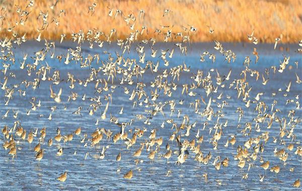 生态南海 鸟类家园