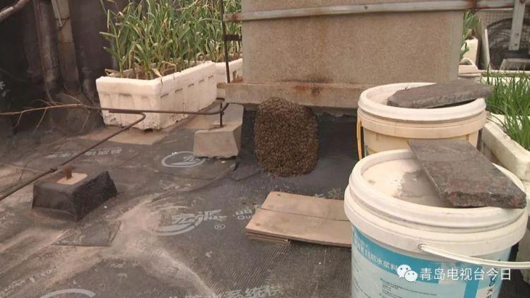 密集恐惧症慎入!数千只蜜蜂楼顶筑巢吓坏居民
