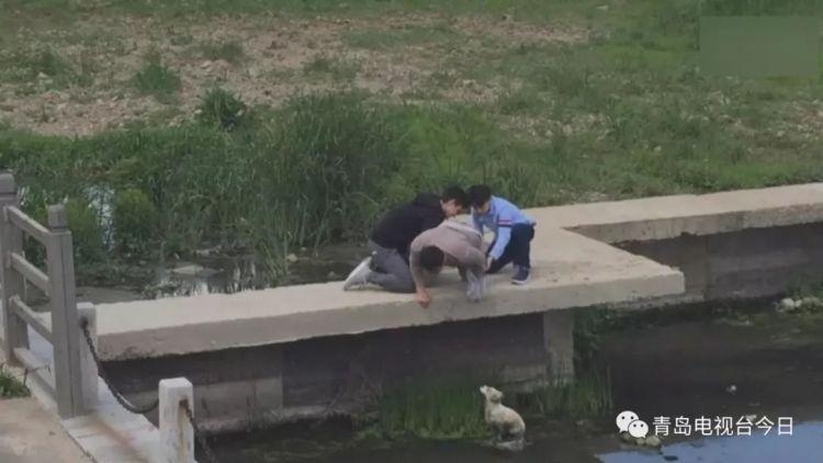 青岛仨小伙合力搭救落水小狗 其中有一名洋学生