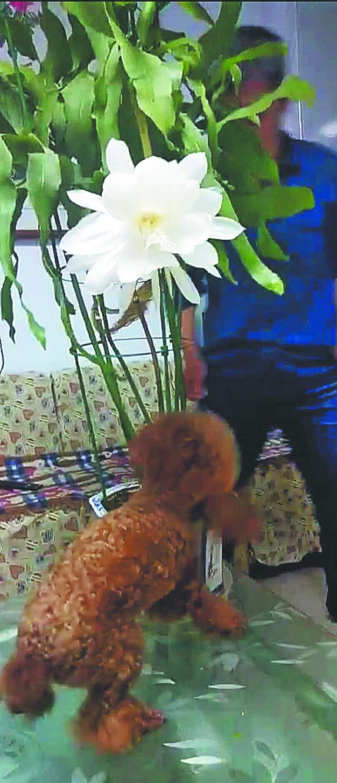 花香迷住宠物狗  主人靠近遭攻击