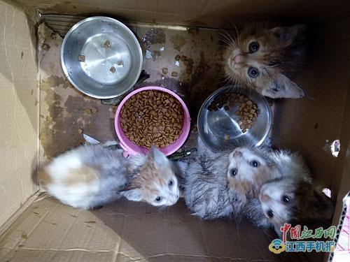 4只猫掉进十多米深排烟管道 女子巧制网兜救猫