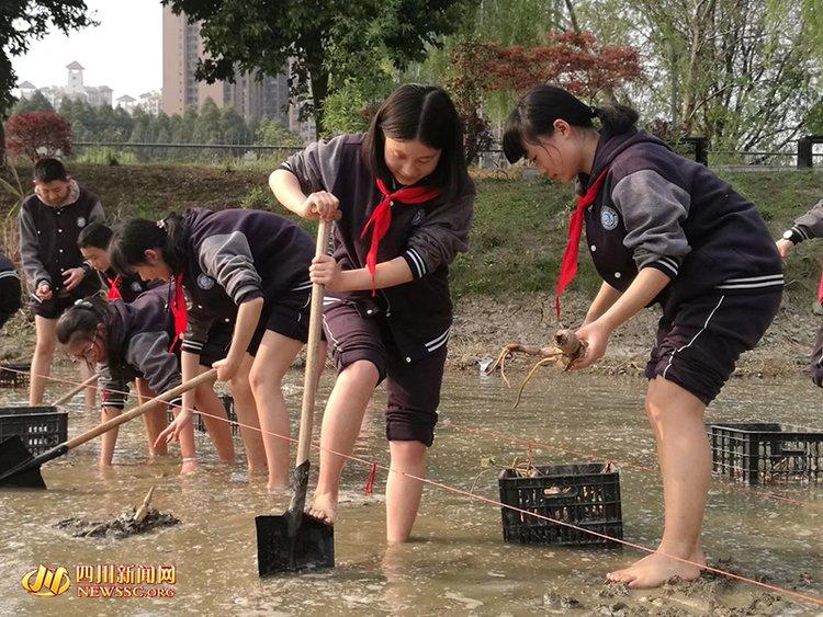 """成都一中学设""""校园农场"""" 上课就是种藕栽花捕鱼"""