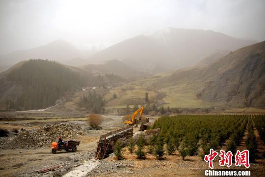 祁连山下栽树忙 治理矿区生态恢复提升地表植被