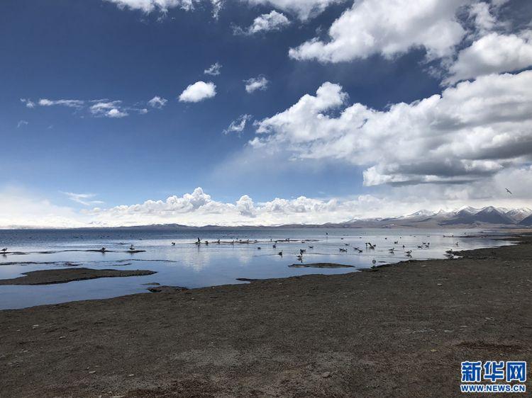 【新时代·幸福美丽新边疆】西藏:代代接力守护绿色家园