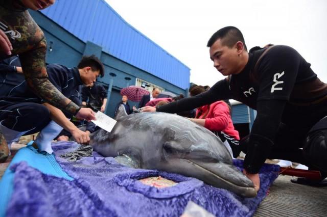"""7头海豚乘专机""""空降""""蓬莱 抵达海洋极地世界"""