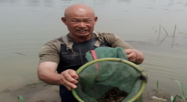 淄博小龙虾市场火爆 养殖户每天1.5吨俩小时抢光