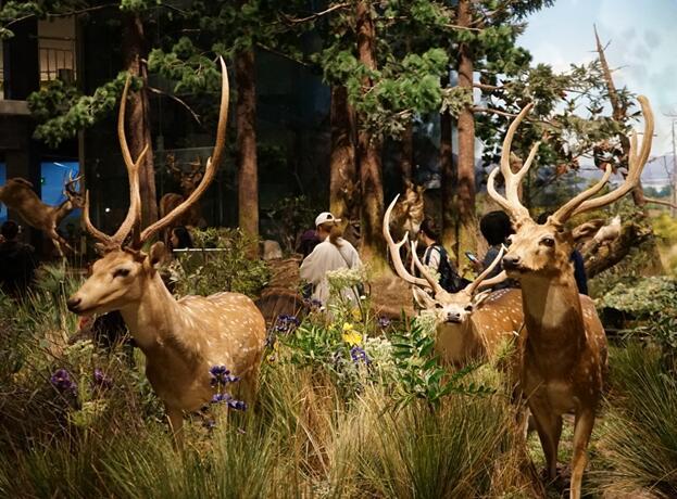 【游青岛】来这家网红博物馆 黑科技带你探索大自然