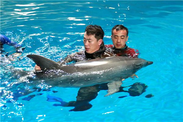"""7头""""海豚宝宝""""落户蓬莱海洋极地世界"""