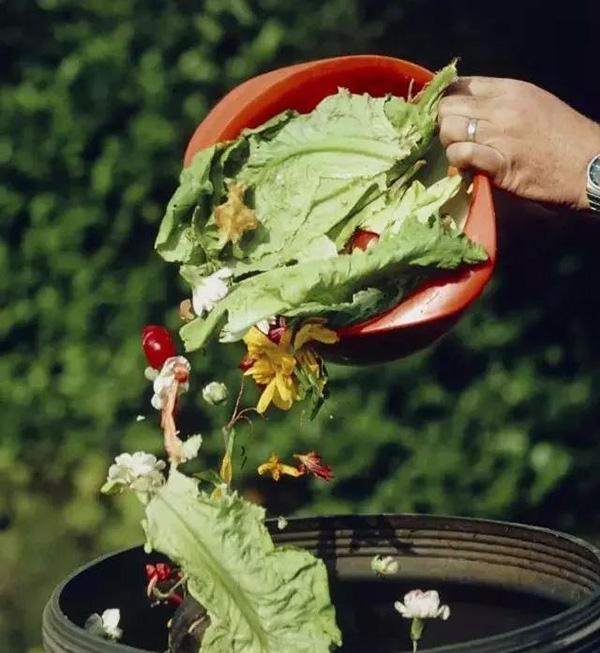 这些地方每天产生两三吨废弃食物,如何确保它们不再上餐桌?