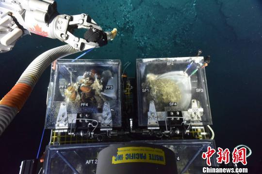 """""""南海深部计划""""遥控深潜科考航次告捷 获多项发现"""