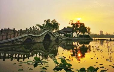 济南大明湖雨后小荷沐浴金色晨光