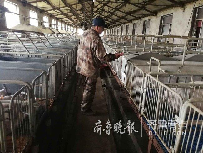 供应量增加,肉价大跌,养殖户一头猪倒赔三百元
