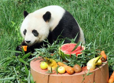 """再见""""珍大""""""""双儿""""!来淄6年两只大熊猫被送回四川"""
