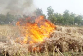 淄博全面禁止露天焚烧秸秆 出现1个以上火点约谈负责人