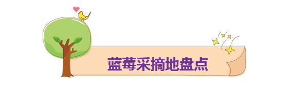 """青岛蓝莓采摘地图新鲜出炉 """"莓""""好时光约不约(图)"""