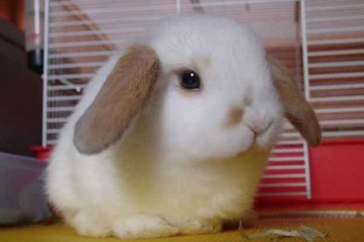 中年男济南商场偷垂耳兔!商场:想报警但不够立案标准