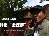 """济南六旬老人21年植树40万株 荒山种出""""金疙瘩"""""""
