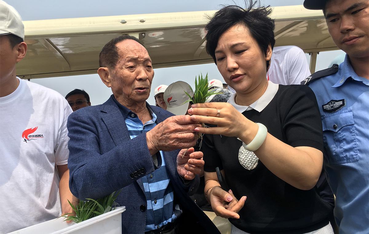 盐碱滩上也能种水稻!青岛海水稻插秧正进行