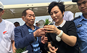 青岛海水稻全国试种