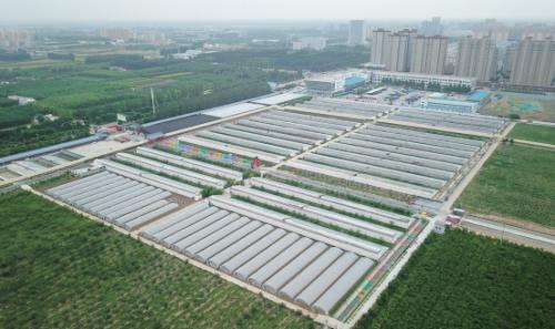 """宁阳县文庙街道吴村:塌陷地上""""凸起""""生态农业经济"""