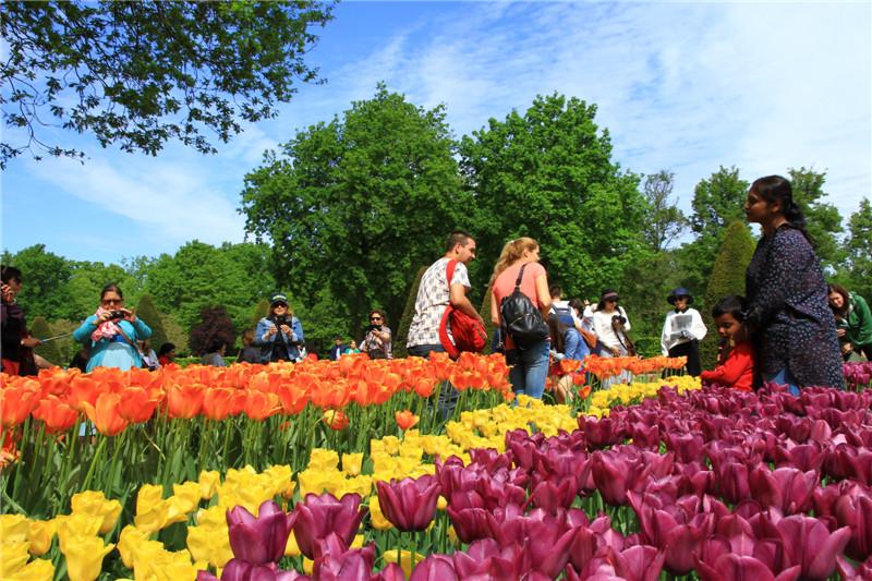 10、他还介绍,库肯霍夫郁金香公园的郁金香五彩缤纷,只有你想不到的色彩!