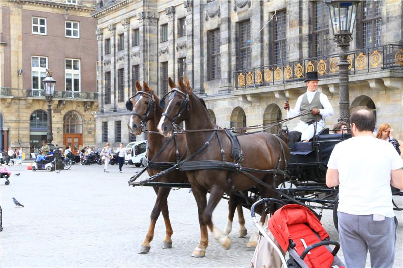 29、乘马车游览市容,听着马蹄踏在石块路面上的声音,确实是一种难得的体验和享受
