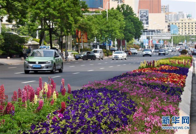 营造良好城市景观 青岛各类时令花卉竞相绽放(图)