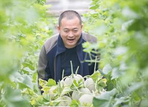 聊城小伙专注种植奢侈水果年售五千万 带领农民脱贫致富