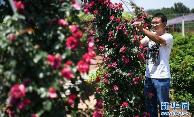 山东滨州:保护生态环境 建设美丽乡村