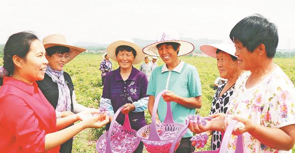 淄博科技扶贫人员尹晶:让玫瑰花助村民走上致富路