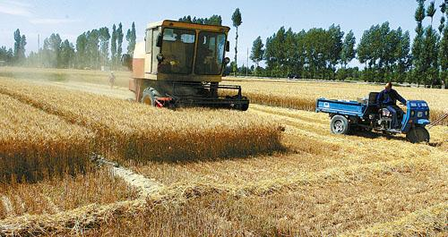 聊城607万亩小麦开机收割 8日前后进入收获高峰