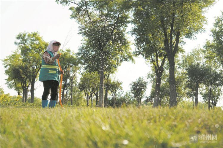 滨州开发区栽植地被植物和草坪12万余平方米