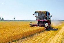 淄博夏粮生产稳中略减 小麦总产比上年减少2.3万吨