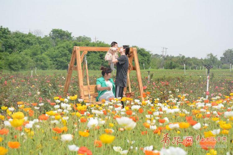 赏梯田花海吃太空西瓜 三合山景区鲜花漫山迎来盛花期