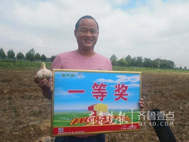 最大蒜头直径8.4cm,成武县举办首届蒜王争霸赛