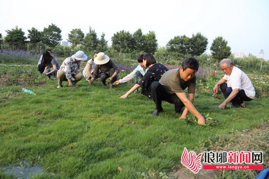 临沂书法广场月季园急需养护人员 粉丝甘做守护者