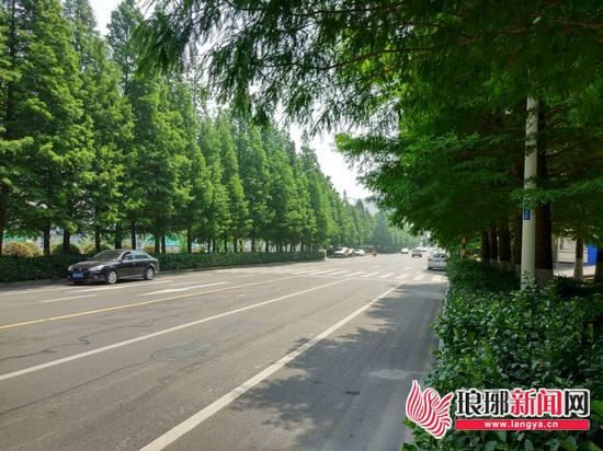 """临沂街巷""""颜值""""提升 市民建议路边多种高大绿植"""