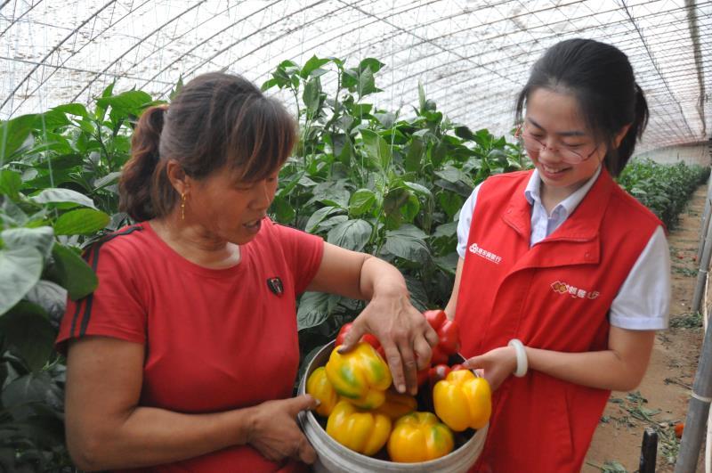 高唐农商银行:支持乡村振兴,从帮助百姓致富入手