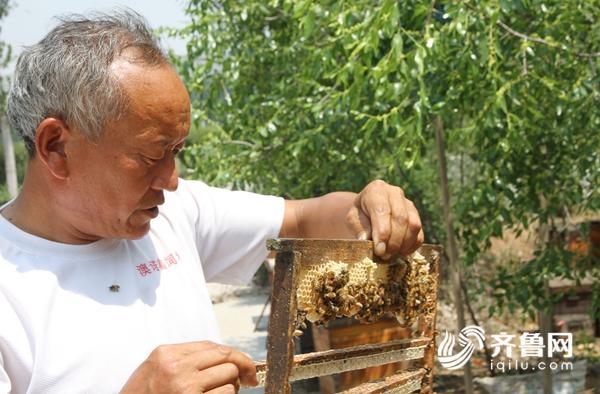 枣庄山亭6.8万亩长红枣盛花期 引来16省放蜂人