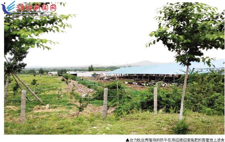 """潍坊探索实践""""种养结合""""模式 """"农牧链接""""促农业高品质发展"""