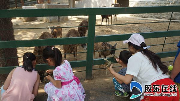 端午小长假期间南山公园将举办各类特色活动