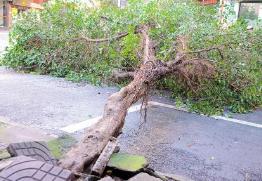 风雨中行道树倒地 淄博三名中学生合力扶树获赞