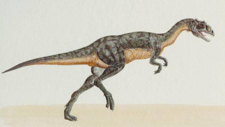 山东发现恐龙足迹化石群,整体足迹的数量超过300个