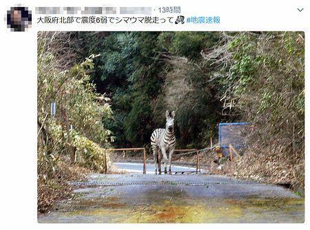 斑马也因地震逃亡?日本大阪地震后网络谣言不断