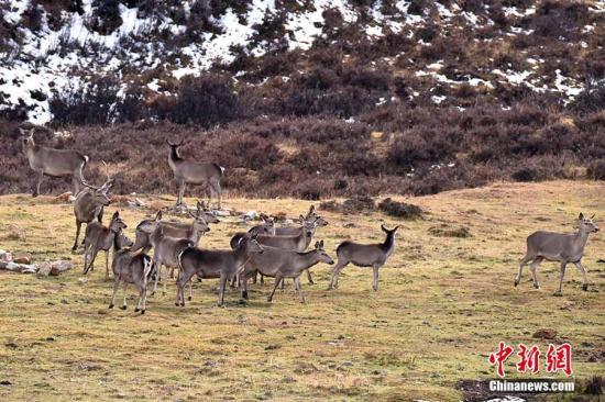 垃圾随处可见,野生动物遭惊扰 多景区发布禁游令