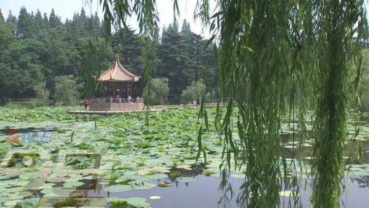 中山公园小西湖垂钓成一景 老人坐在栅栏上太危险