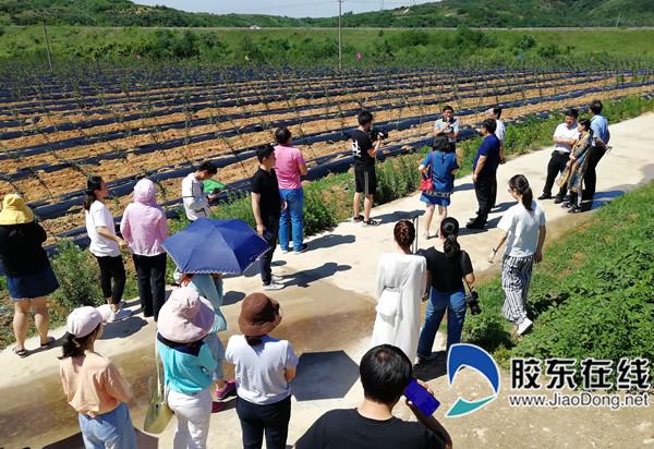 栖霞市国家现代农业产业园实现乡村振兴