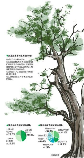 砍伐古树名木最高可罚30万 济南有2601棵古树名木登记在册