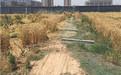 狂风吹倒桓台路边大树阻交通 村民已清理